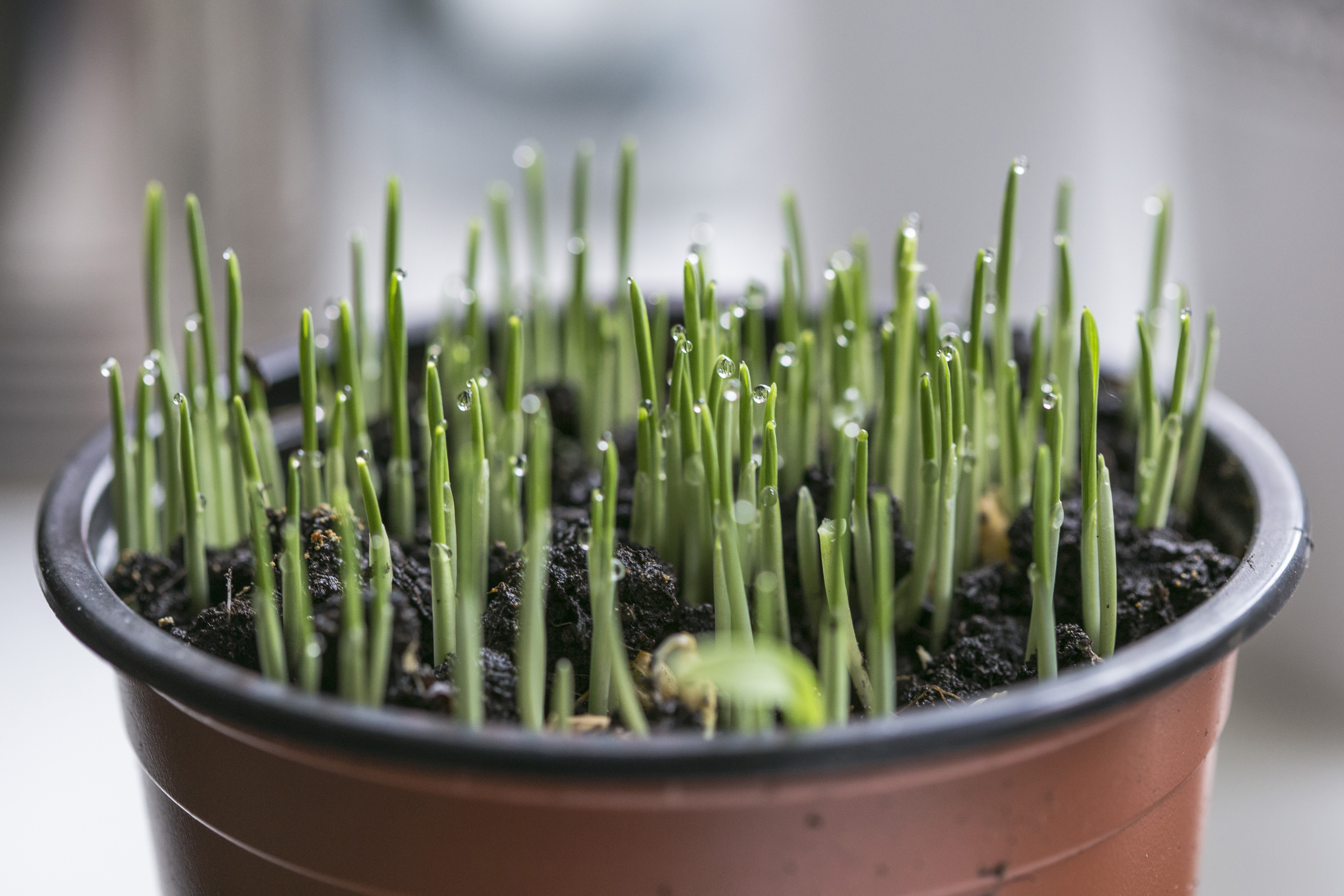 Biodegradable Plastic Makes Planters More Sustainable.jpg