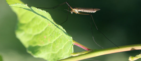 Insect Repellent Products