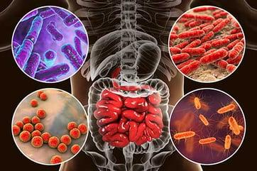 microbiome-bacteria